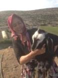 KAŞıNTıLAR - Kanser Hastasıydı Şimdi Köyünde Mutlu Hayat Sürüyor