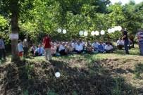 İkizce'de Fındıkta Verimi Artırma Çalışmaları