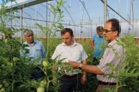 FAHRI KESKIN - Suşehri'de Devlet Desteğiyle Kurulan Seralarda Ürün Hasadı