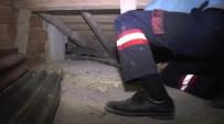 APARTMAN YÖNETİCİSİ - Çatıda Kedi Alarmı