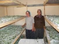 MUĞLA KÖYCEĞİZ - Evlerinde Böcek Yetiştirerek 5 Bin Lira Kazandılar