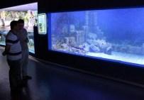 MERSIN - Türkiye'nin TEK 'Altın Mersin' Balığı ETİ Sualtı Dünyasında