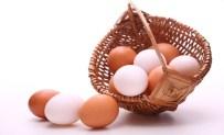 Ordu'da Yumurta Üreticileri 'Birlik' Olacak