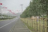 ÇAYKARA CADDESİ - Büyükşehir, 3 Ayda 5 Bin Ağaç Dikti