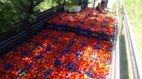 İLAÇ PARASI - Uluköy Çiftçisi Gübre Fiyatlarından Şikâyetçi