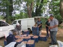 Yenice'de Barbunya Hasadı Başladı