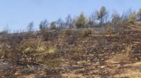 KISECIK - Hatay'da Orman Yangını Söndürüldü