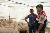 ÖZEL GÜVENLİK - Hayvan Pazarında Jandarmadan Sıkı Denetim