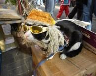 SEVİMLİ KEDİ - Bu Kedi Gözlük Takıyor