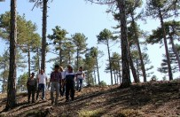 İSMAIL TÜFEKÇI - Isparta Orman Bölge Müdürü, Burdurda İncelemelerde Bulundu