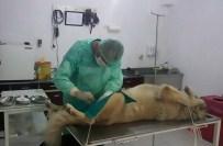 KÖPEK ÇİFTLİĞİ - Burhaniye Köpek Çiftliğinde Çalışmalar Titizlik İle Devam Ediyor