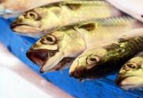 BALIKÇI ESNAFI - Marmara'daki Balık Çeşitliliği Yüzleri Güldürüyor