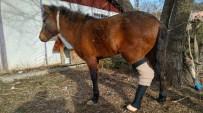 ORTEZ - 'Papi' Hayata Protez Bacak İle Tutundu