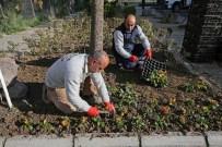 BADEMLER KÖYÜ - Karşıyaka'ya 200 Bin Kış Çiçeği
