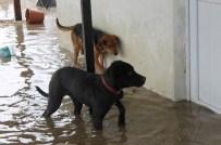 SU TAŞKINI - Edirne'de Taşkında Mahsur Kalan Köpekler Kurtarıldı
