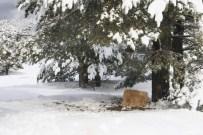 DÖĞER - Soğuk Havada Yaban Hayvanları Unutulmadı