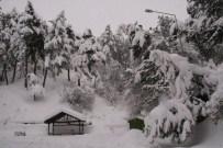 KAR MANZARALARI - Yozgat'ta Karın Ağırlığını Taşıyamayan Ağaçlar Kırıldı