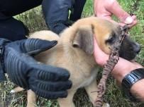 YAVRU KÖPEK - Tellere Sıkışan Yavru Köpek İtfaiye Tarafından Kurtarıldı