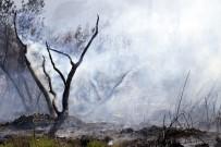 SANAYİ SİTESİ - Torpilden Çıktığı İddia Edilen Yangında 30 Dönüm Ormanlık Alan Kül Oldu