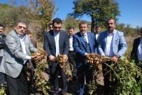 MEHMET ÖZCAN - Türkiye'nin İlk 'Beyaz Patates' Hasadı Yapıldı