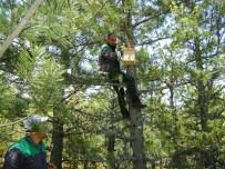 KUŞ YUVASI - Kütahya Orman Bölge Müdürlüğü'nden Kuşlara Yuva