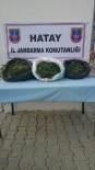 HINT KENEVIRI - Hatay'da Uyuşturucu Operasyonu