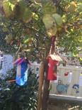 HAYVAN SEVGİSİ - Kreş Öğrencilerinden Kuşlar İçin Yem Kabı