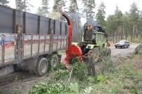 VEYSEL EROĞLU - Orman Gençleştirme Çalışmalarında Ekonomiye Katkı
