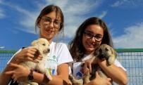SOKAK HAYVANLARI - Sokak Hayvanlarına Sıcak Yuva