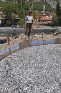 1.5 milyon balık telef oldu