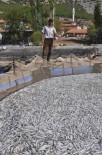 ALABALIK - 1.5 milyon balık telef oldu