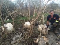 EVE DÖNÜŞ - Bataklığa Saplanan Koyun Sürüsünü İtfaiye Kurtardı