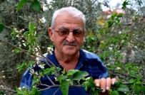 ERİK AĞACI - Erik Ağacı İkinci Kez Çiçek Açtı