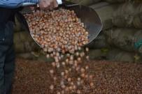 MANIPÜLASYON - Fındık Fiyatı Düştü, Üretici 'Elde Tutma' Kararı Aldı