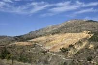 ORMAN İŞLETME MÜDÜRÜ - Orman İşletme Bozuk Ormanlara 'Çam' Değil 'Ceviz' Dikecek