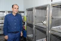 HAYVAN BAKIM EVİ - Yıldırım'da Sokak Hayvanları Sahipsiz Değil