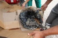 İTFAİYECİLER - Zifte Giren Köpek Kurtarıldı