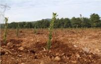 KUŞBURNU - Atıl Durumdaki Bozuk Ormanlar Orman Köylüsüne Gelir Kapısı Oluyor