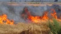 DALYAN - Edremit'te Sazlık Yangını