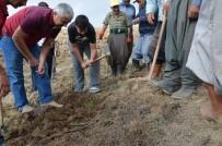 ORMAN İŞLETME MÜDÜRÜ - Mersin'de Ağaçlandırma Çalışmalarında Hedefler Aşıldı