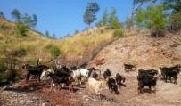 ELEKTRİK AKIMI - Ormanda Keçilere Arı Tülü Önlem