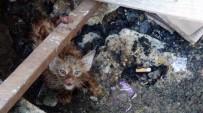 YAVRU KEDİ - Vatandaşların Kedi Kurtarma Operasyonu