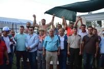 GÜREŞ - Dalyan'da Başpehlivan İsmail Balaban