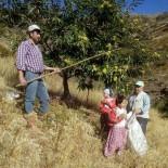AHMET ACAR - Aydın'da Kestane Hasadı Başladı
