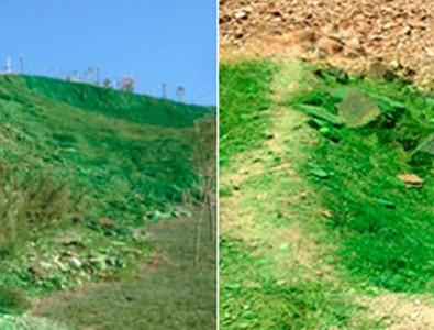 CHP'li belediyenin doğa anlayışı: Yeşile boyamak