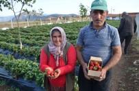 Çilek Yetiştiriciliği Dikenli Köyü İçin Geçim Kaynağı Oldu