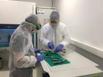 İSTANBUL ÜNIVERSITESI - İAÜ Türkiye'deki İlk Antik DNA Çalışmasını Yaptı
