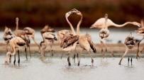 İNTERNET SİTESİ - Türkiye'nin Kuşları Belgesel Oldu