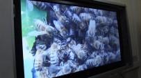 BAŞTÜRK - Burhaniye'de Arıcılık Kurslarına Kadın İlgisi