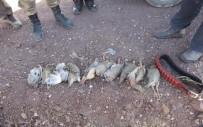 Erzincan'da Avlanma Limitini Aşan Avcılara Ceza Yağdı